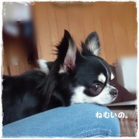 nico-2015_0329(012)