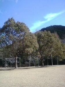 kotori2-s.jpg
